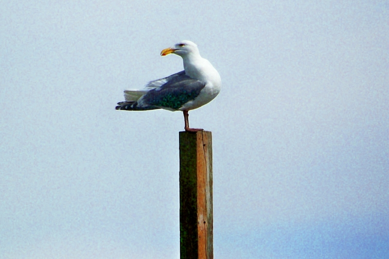 Seagull Watching Us On The Boat