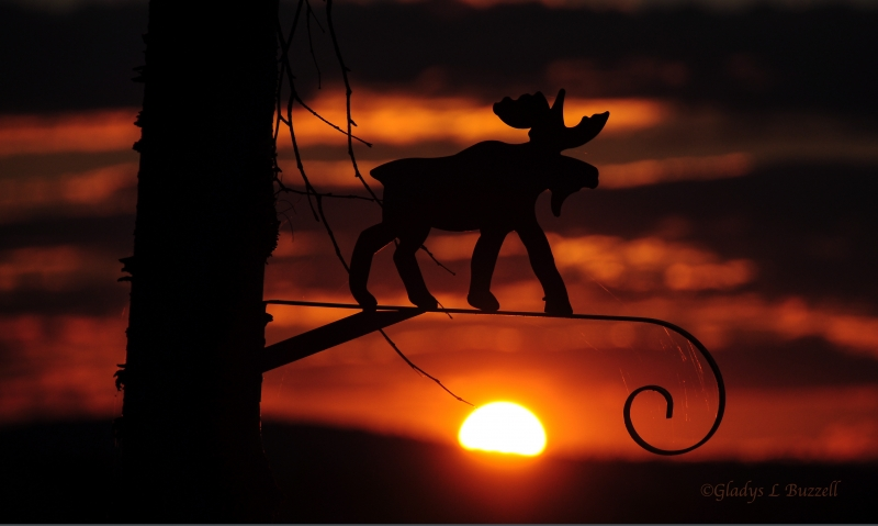 Moose Sunset