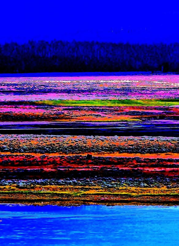 Hayden Valley Abstract