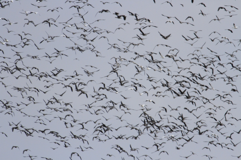 Winter Migration