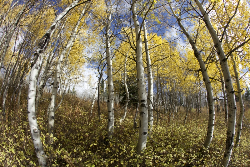 Fisheye Fall