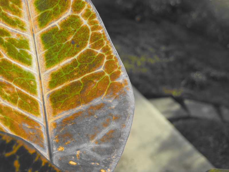 Leaf In An Almost Gray World3
