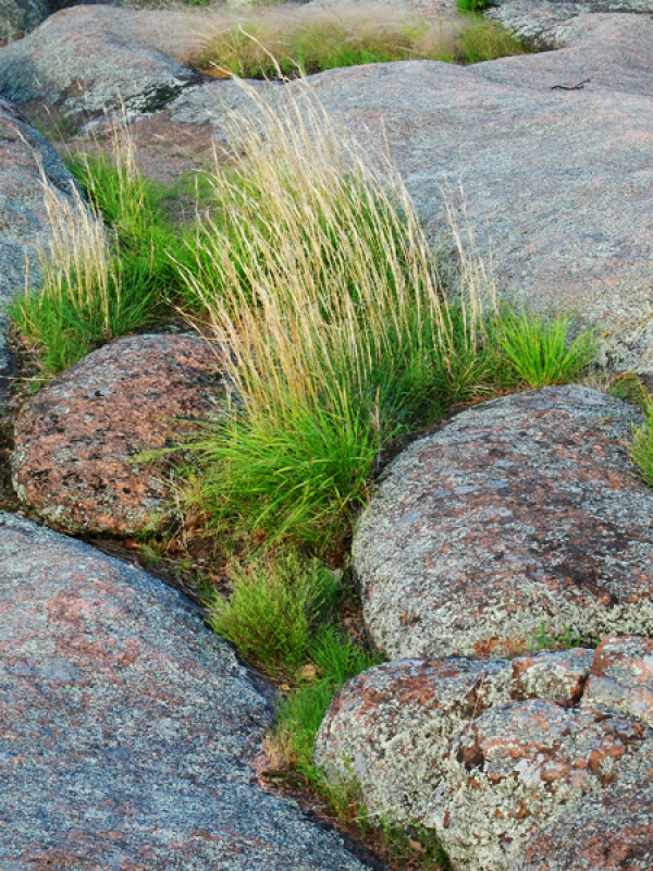 Grass And Granite