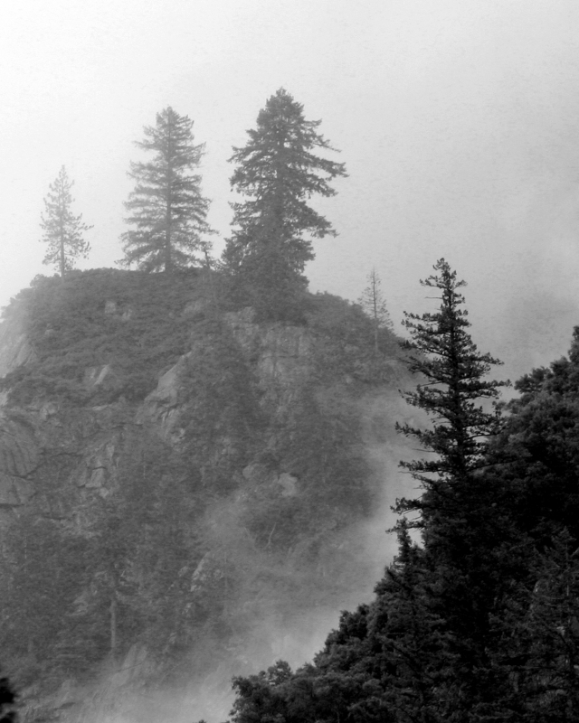 Tres In Fog At Yosemite