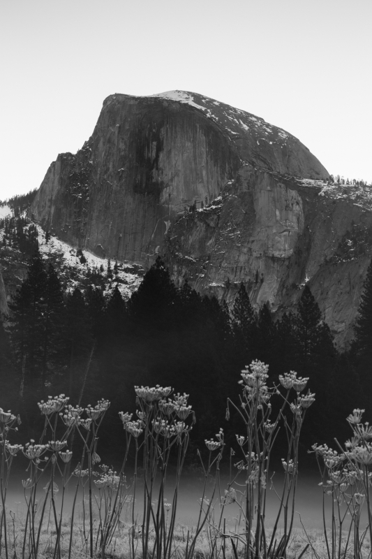 Half Dome In The Meadow