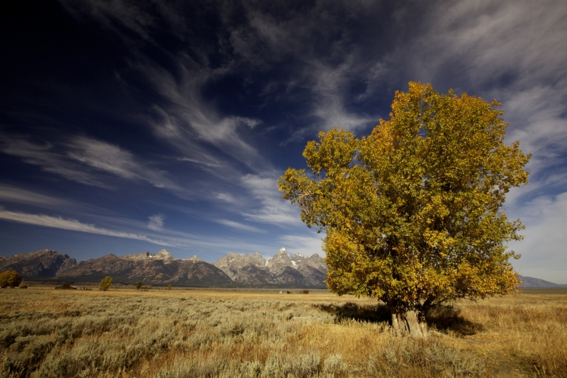 Teton In Fall