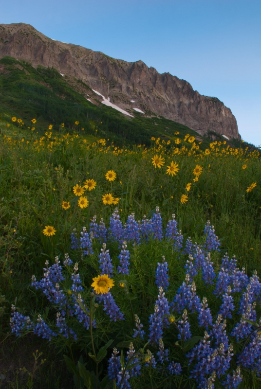 Blue Lupin And Mt. Gothic