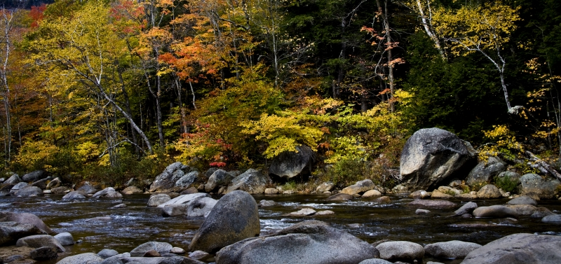 Autumn Foliage Overlooking River Stream