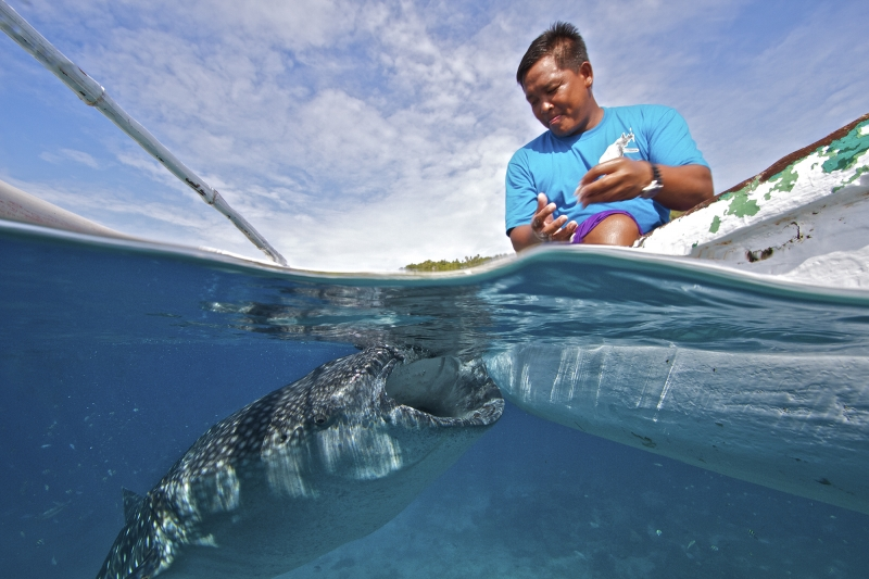 Fisherman And Whale Shark