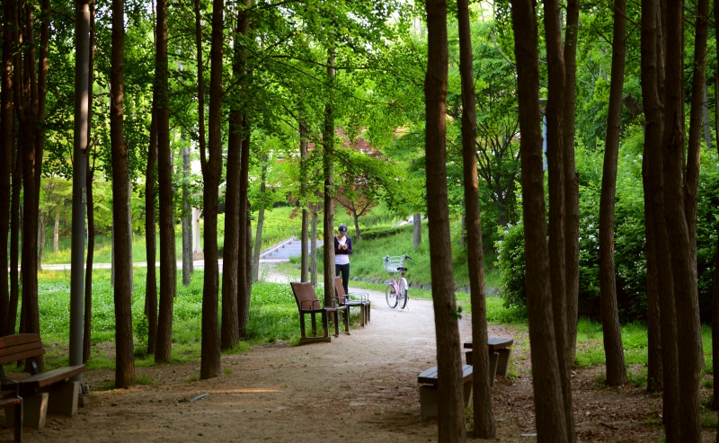Seoul Forest Park