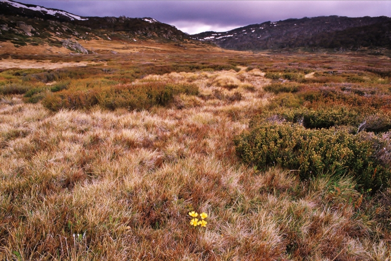 Perisher Valley In Summer