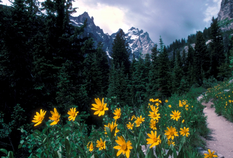 On The Trail – Grand Tetons Natl. Park