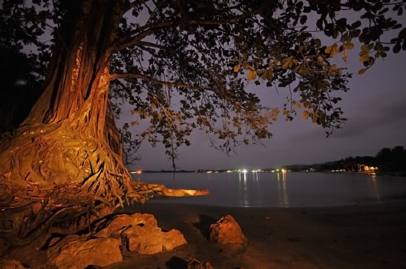 Night Mompiche Beach And Tree