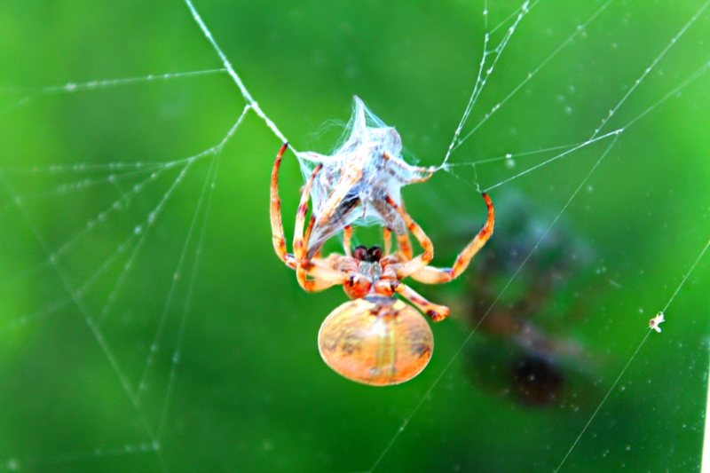 Orb Spider Weave