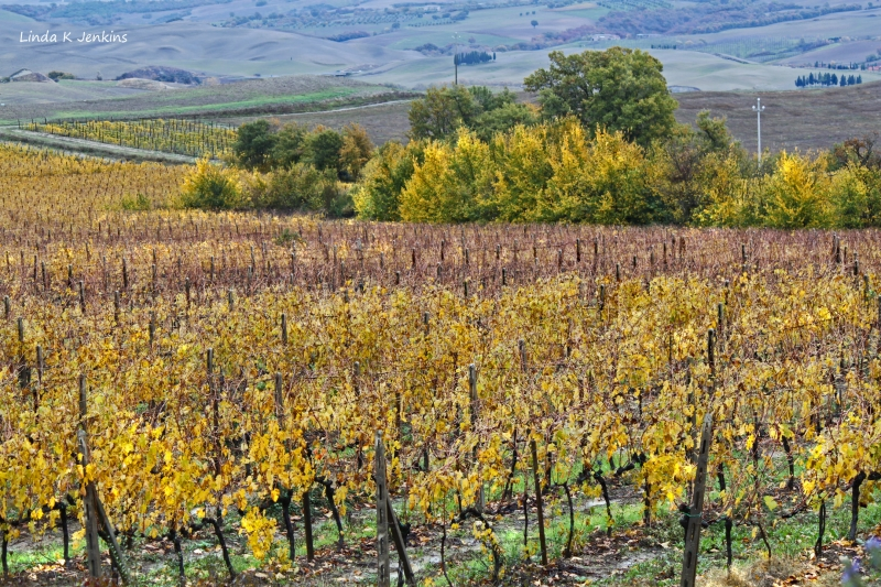 Montalcino Autumn Vineyards