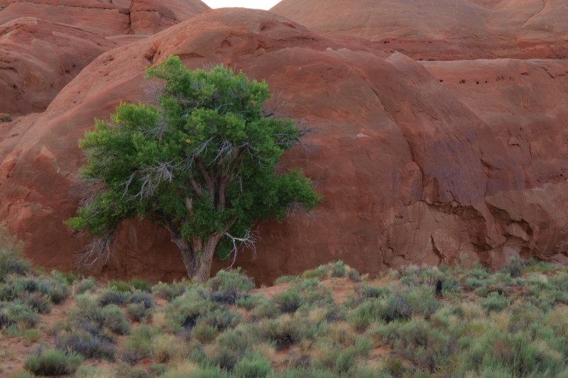 Desert Tree And Rock