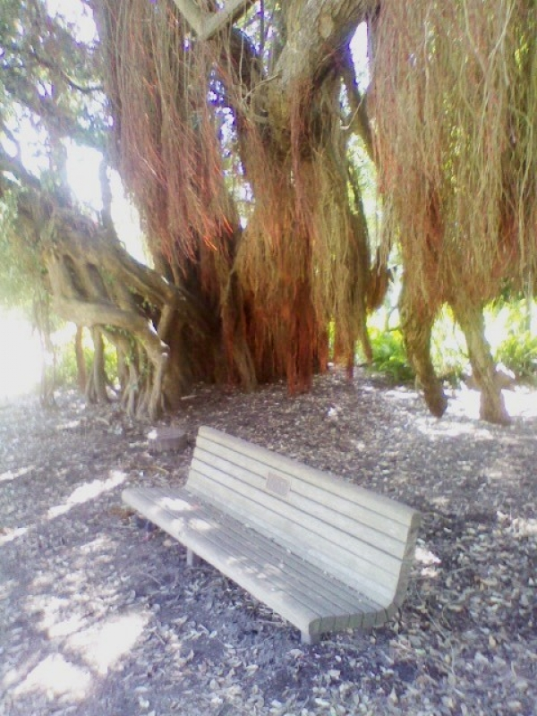 Covered Bench