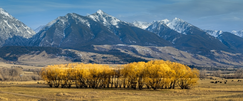 Yellow Tree And Rocky Mountain