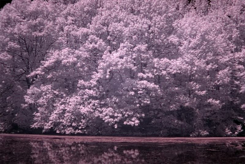 Infrared Hdr Hastings Pond