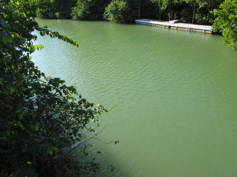 Green Canal
