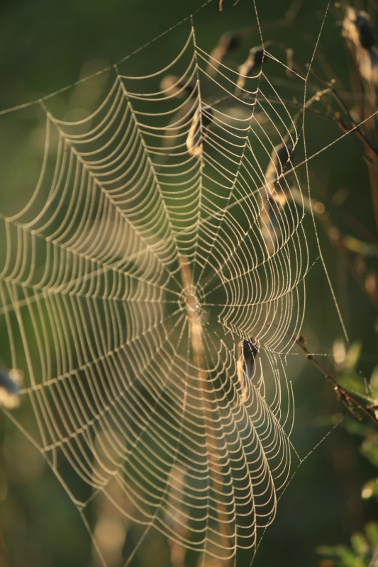 Spidy Web At Stroud Preserve