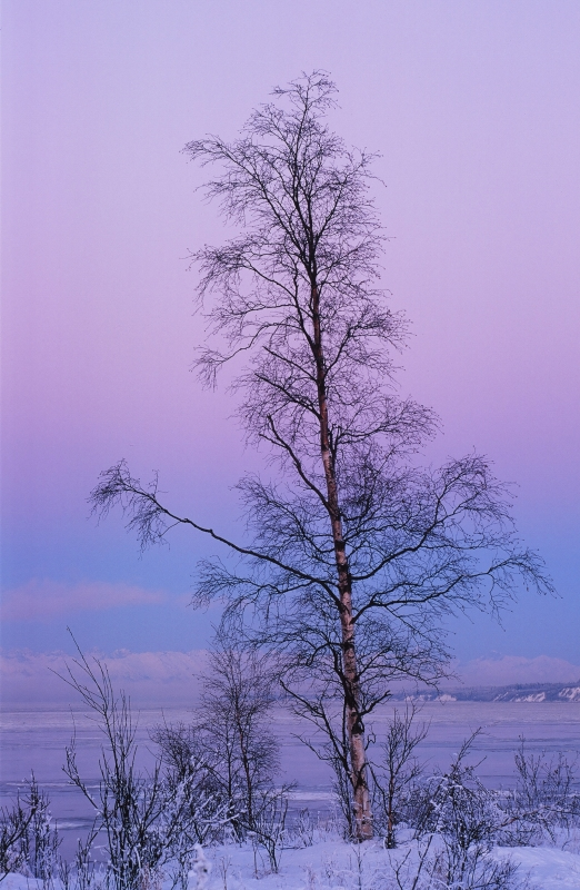 Lone Tree At Winter Sunset