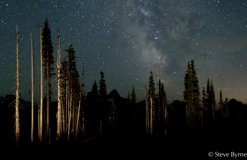 Trees, Tatoosh And Milky Way