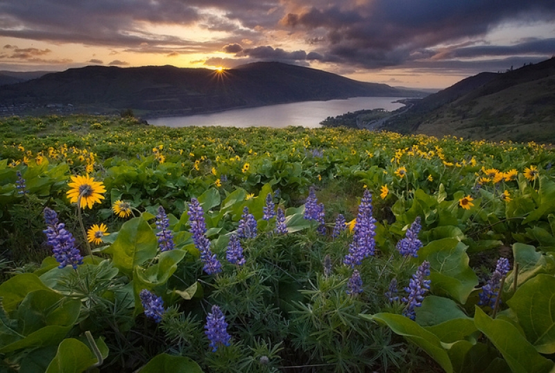 Spring Wildflowers – Rowena, Oregon