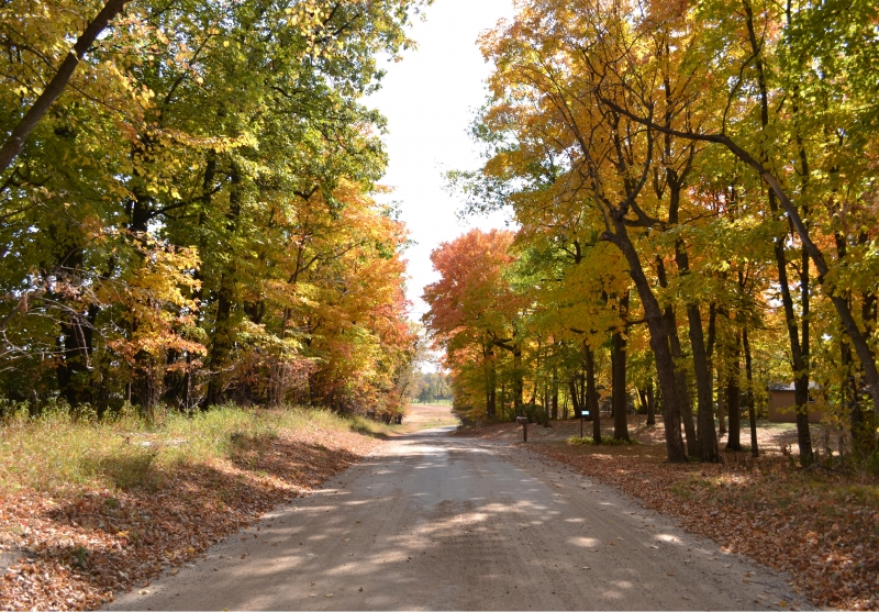 Colorful Country Road