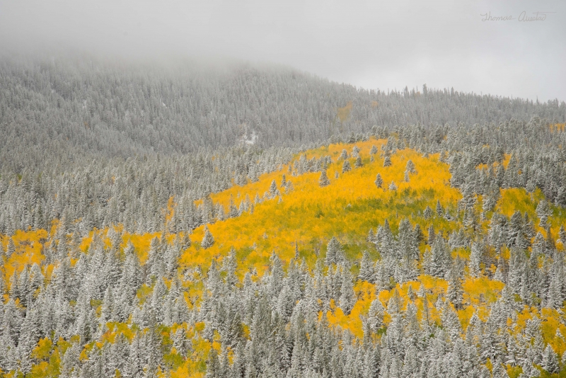 Early Fall Snow