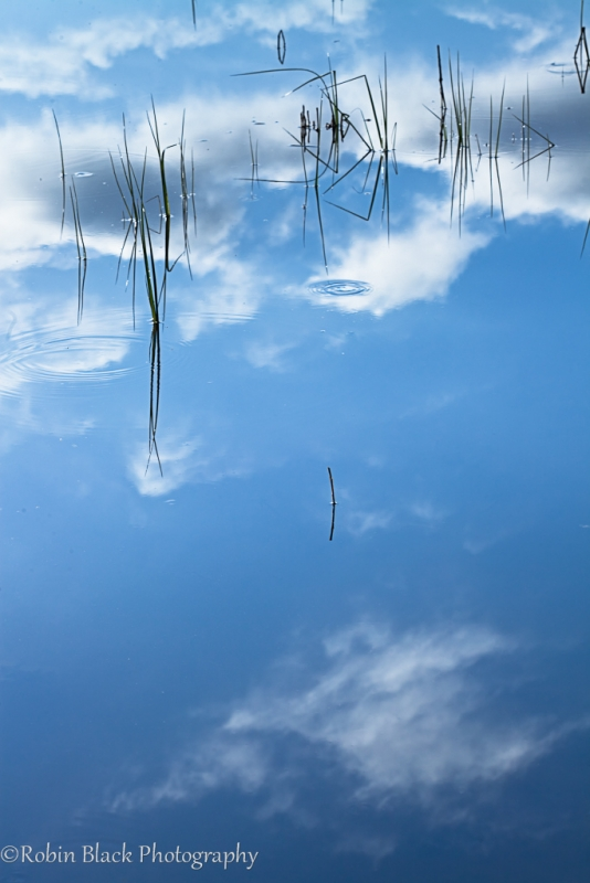 Grass And Clouds Reflection, Morror Bay