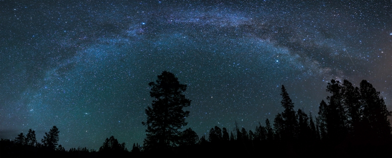 Pine Standing Tall Under The Milky Way