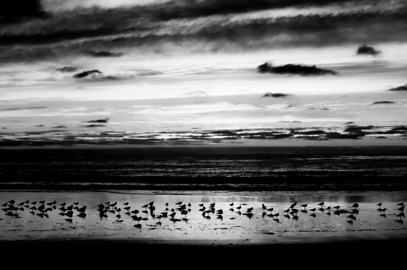 Gulls And Clouds