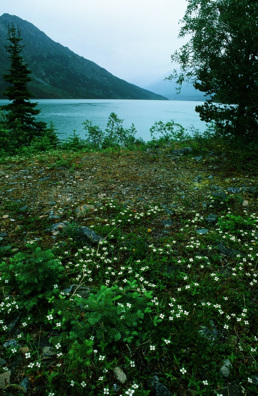 Rainy Day On The Chilkoot Trail