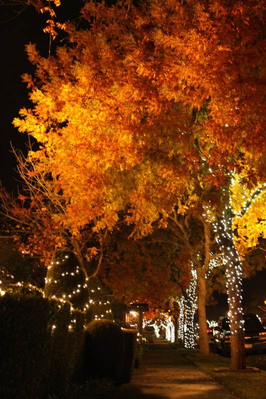 Yountville Fall Colors At Night