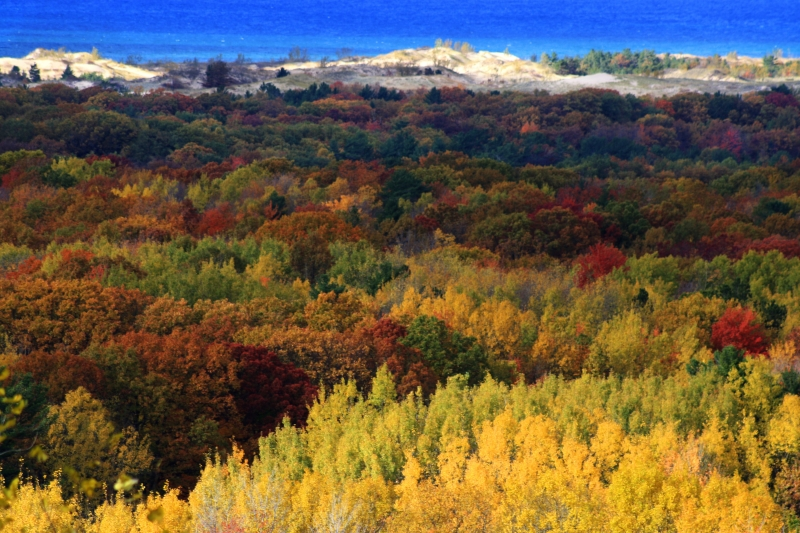 Fall In Hart, Mi