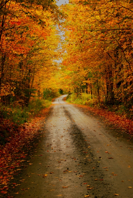 Fall Colors On A Vermont Country Road