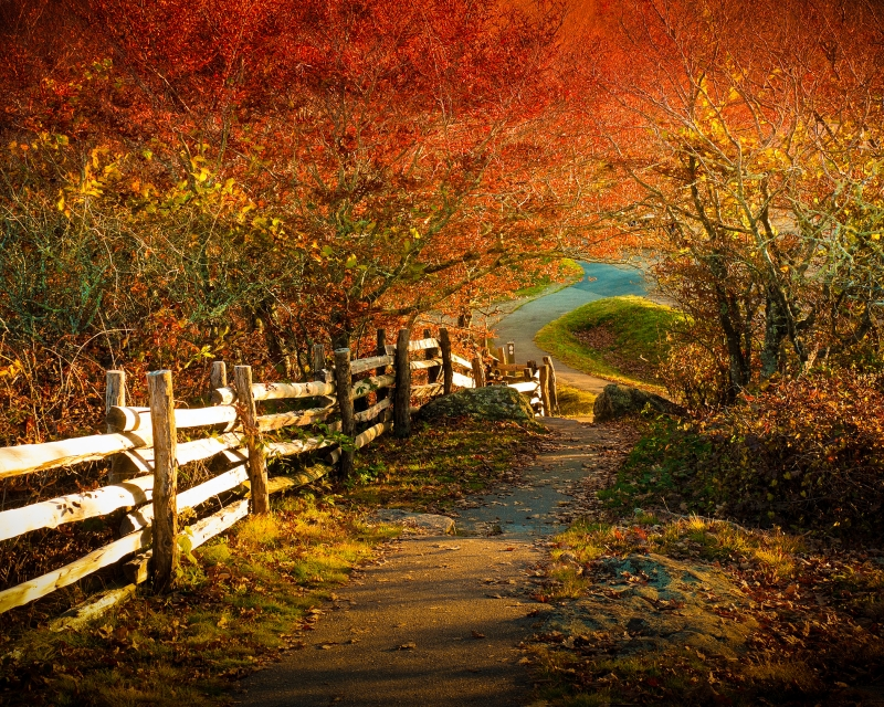Pathway In Fall, Blue Ridge Mountains, Usa