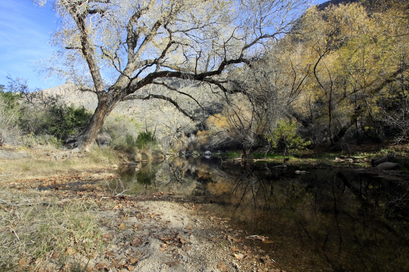 Sabino Canyon Winter