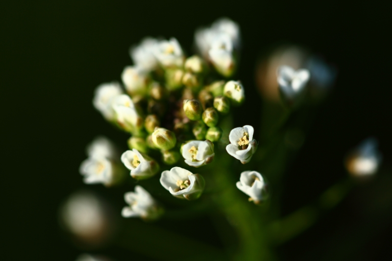 Little Flowers…