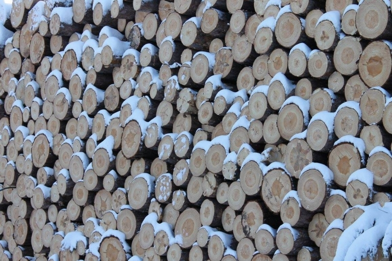 Winter Logs