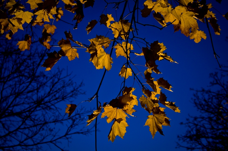 Blue Sky With Yellow Leaves
