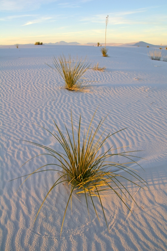 Desert Dusk, White Sands National Monument