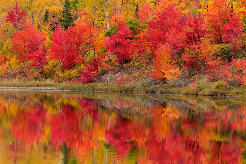 Red Maples Reflected In Gryphon Lake