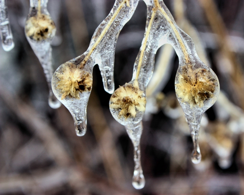 Frozen Drips