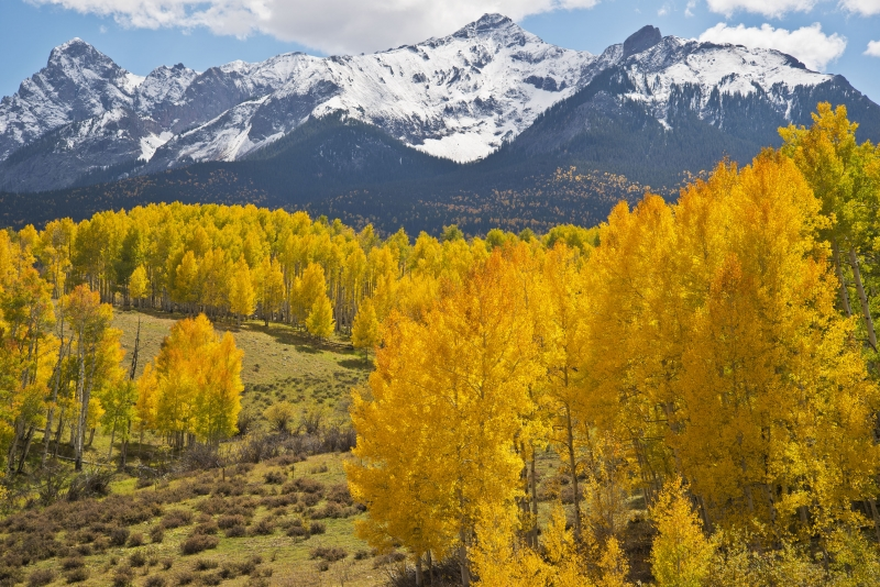 Dallas Divide Aspens