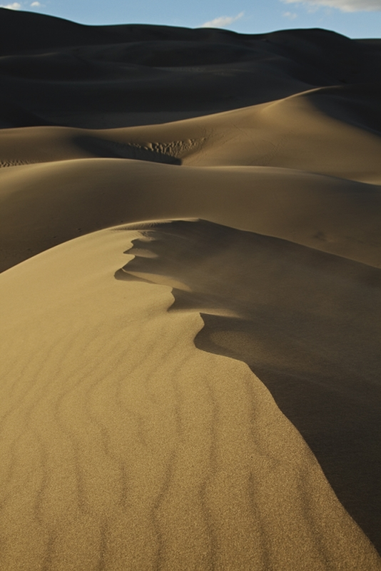 Evening In The Dunes