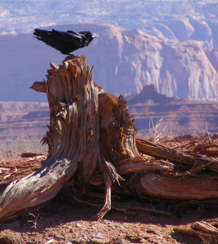 Crow At Monument Valley