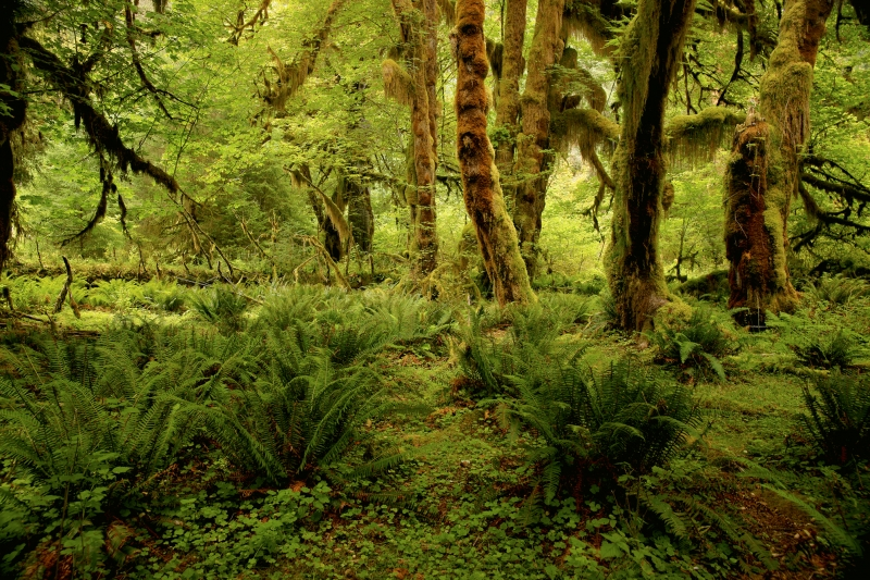 Hall Of Mosses Trail Hike