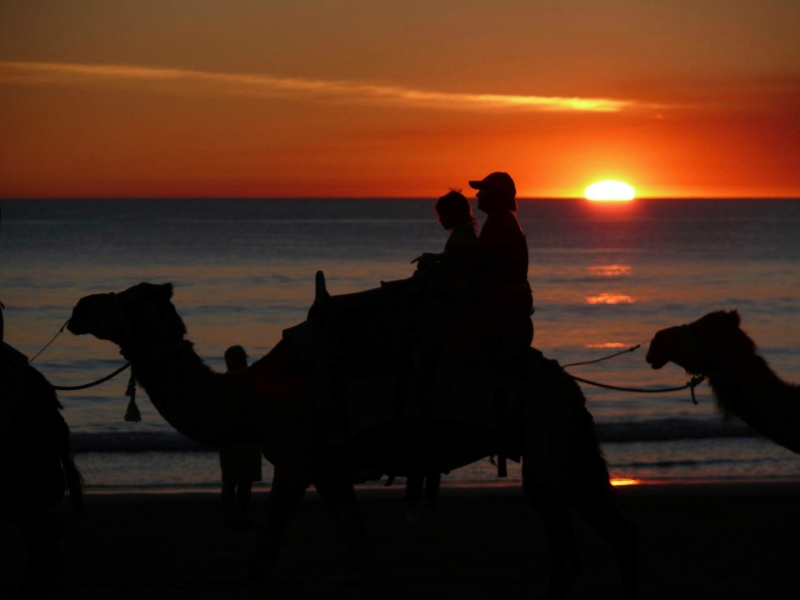 Riding Camels On Cable Beach At Sunset